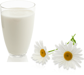 milch-blume.png
